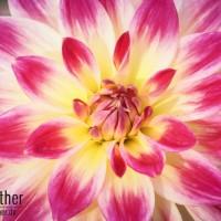 Blume im Grugapark