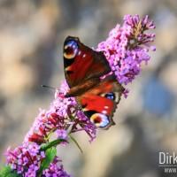 Schmetterling auf Zeche Zollverein
