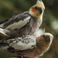 Vögel im Tierpark Bochu