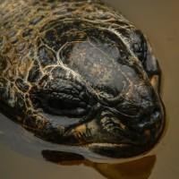 Schildkröte im Tierpark Bochum