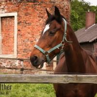 Pferd im Schloss Nordkirchen
