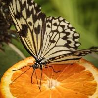 Schmetterling im Maximilianpark