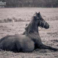 Pferd in Schausende