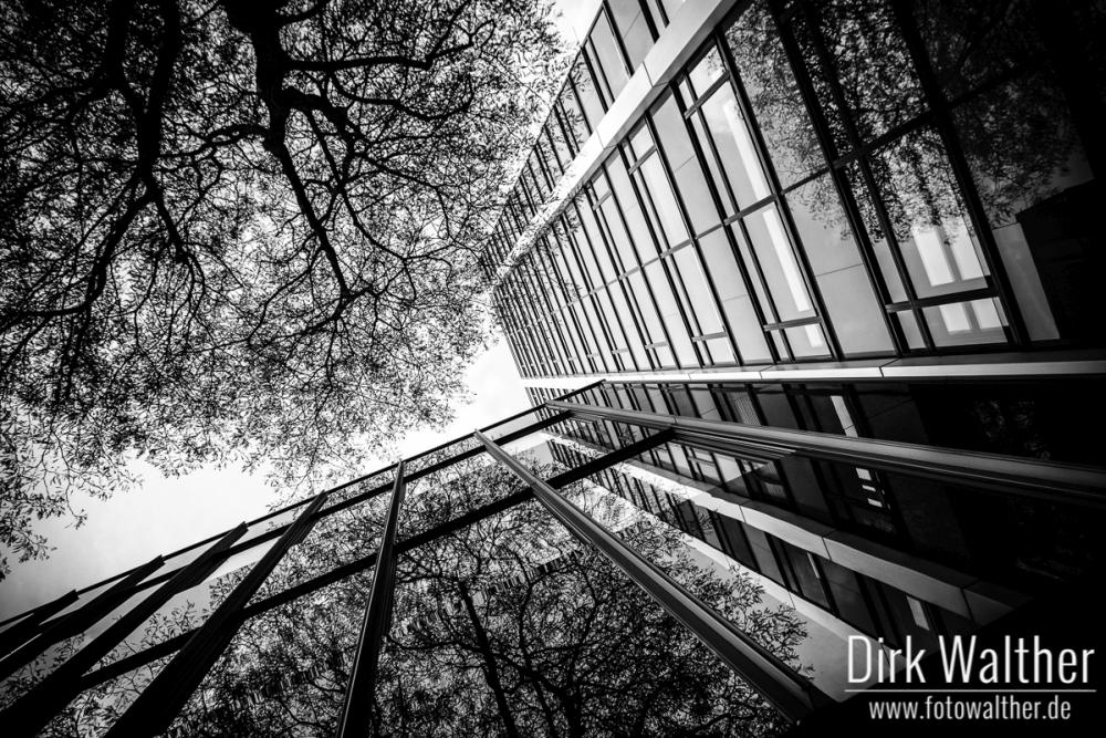 Natur trifft Architektur in Hamburg