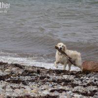 Hund am Strand von Westermakelsdorf