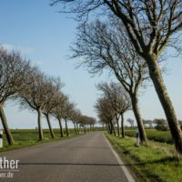 Krumm gewachsene Bäume auf Fehmarn