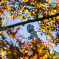 Herbstkules
